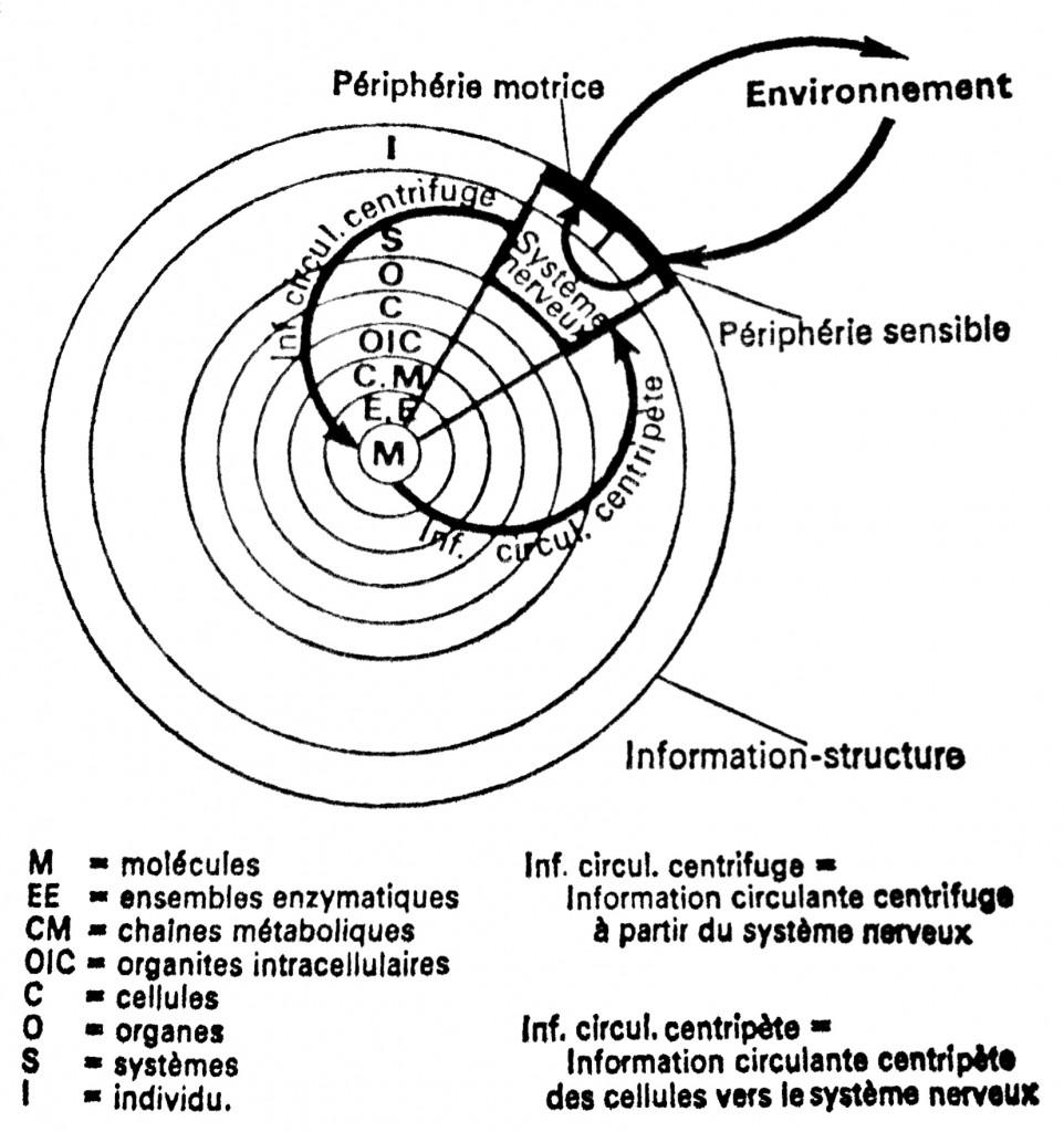 LABORIT_information-structure-962x1024