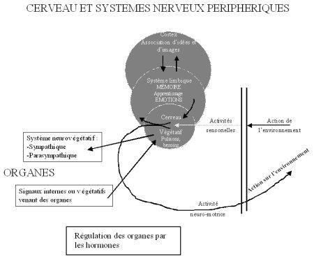 dossier14_cerveaureptilien