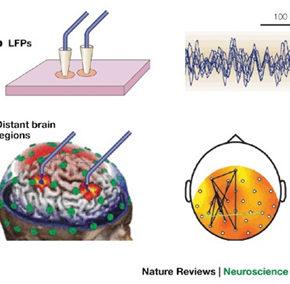 Synchronisation de l'activité dynamique du cerveau : quand Laborit mène à Varela