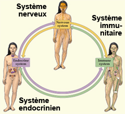 3-systemes